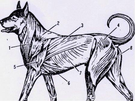 Как сделать укол собаке