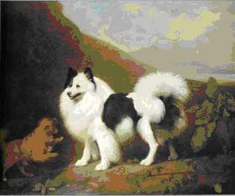 Картинки лежащая собака