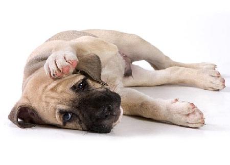 Гастрит у собаки с рвотой квамател и церукал