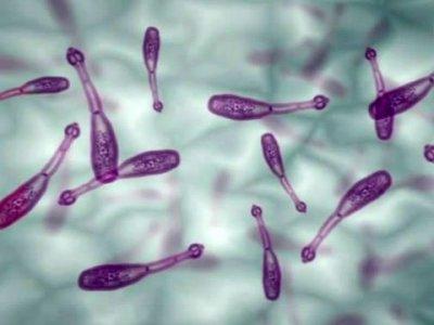 личинки глистов у человека