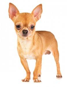 Почему собака дрожит и трясется